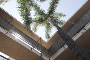 Classic California palm trees - Kendall Brook Apartments, San Bernardino, CA